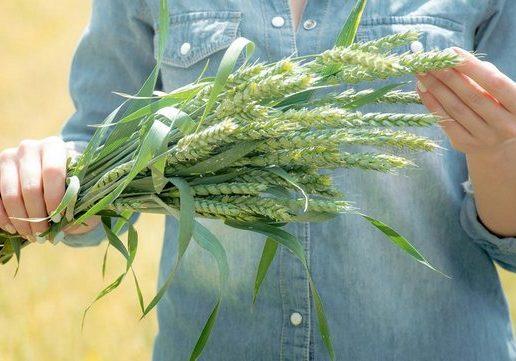 wheat-600